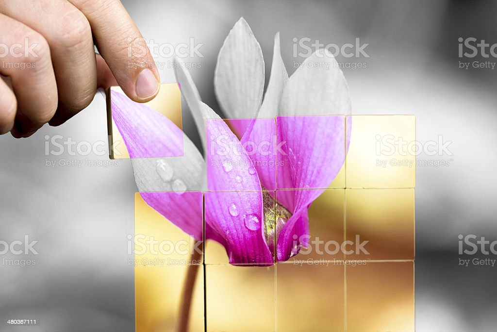 Beautiful flower with dewdrops stock photo