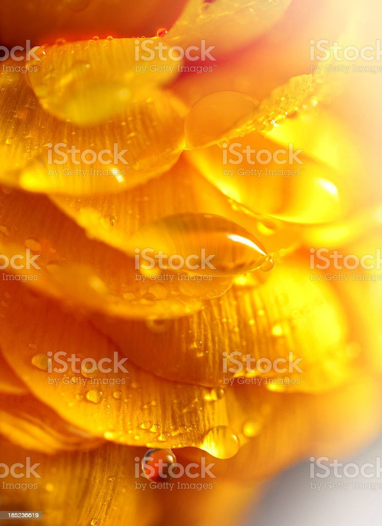 Beautiful flower with drops of water royalty-free stock photo