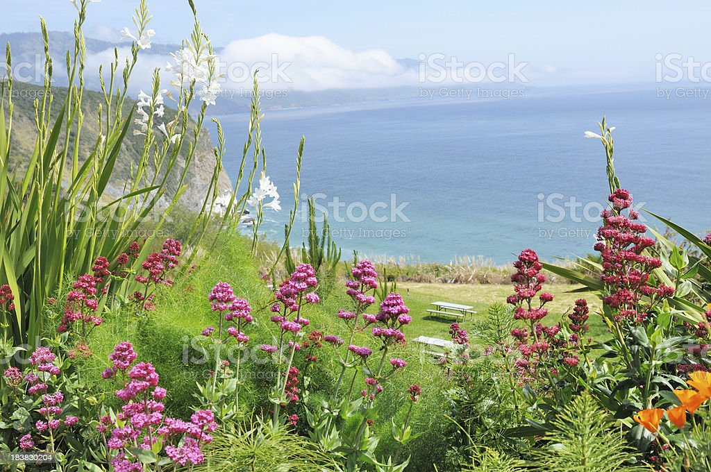 Beautiful Flowers along California Coast stock photo