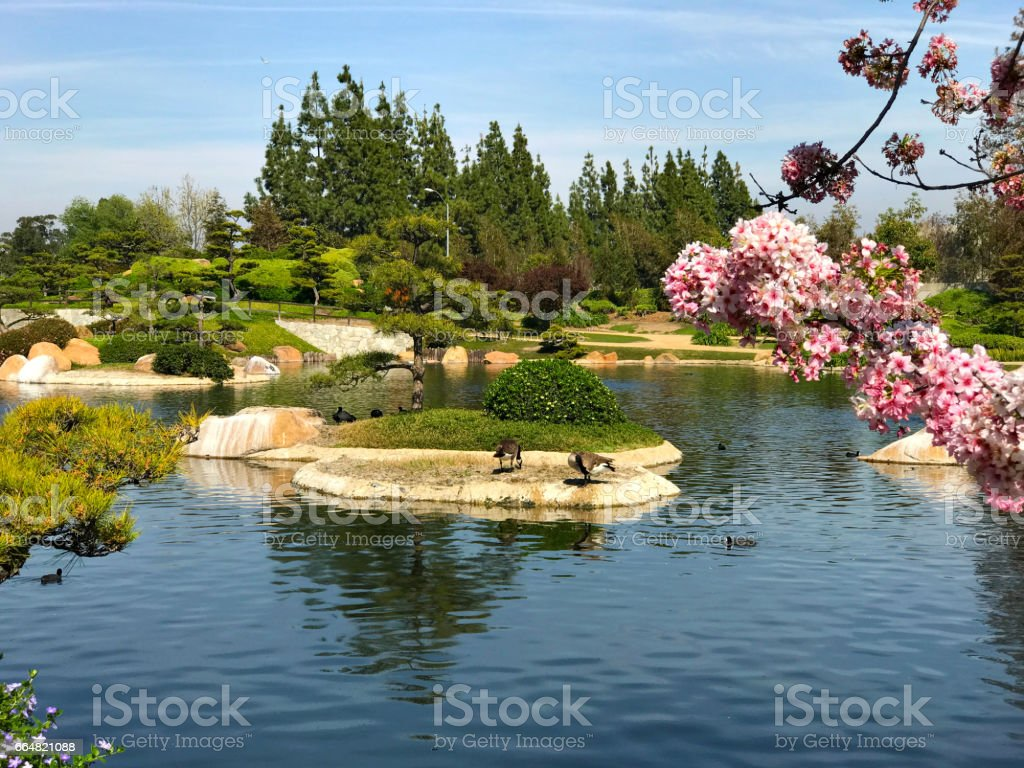Beautiful Flowers And Trees In Japanese Garden Stock Photo 664821088