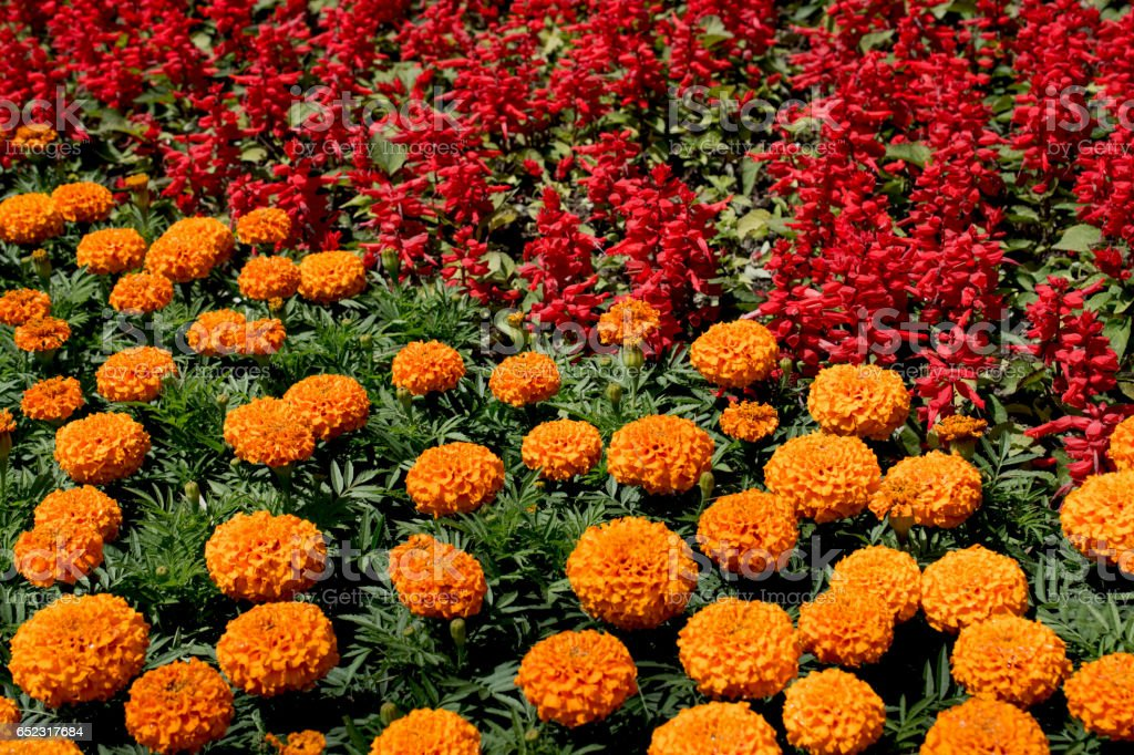 Beautiful flowers as a background stock photo