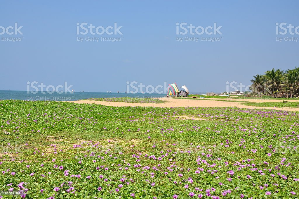 Beautiful flowers at beach stock photo