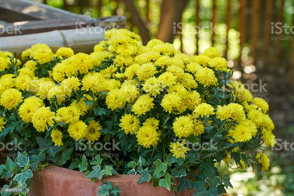 Beautiful flowers background stock photo
