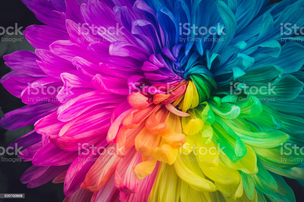 Beautiful flowers background stock photo