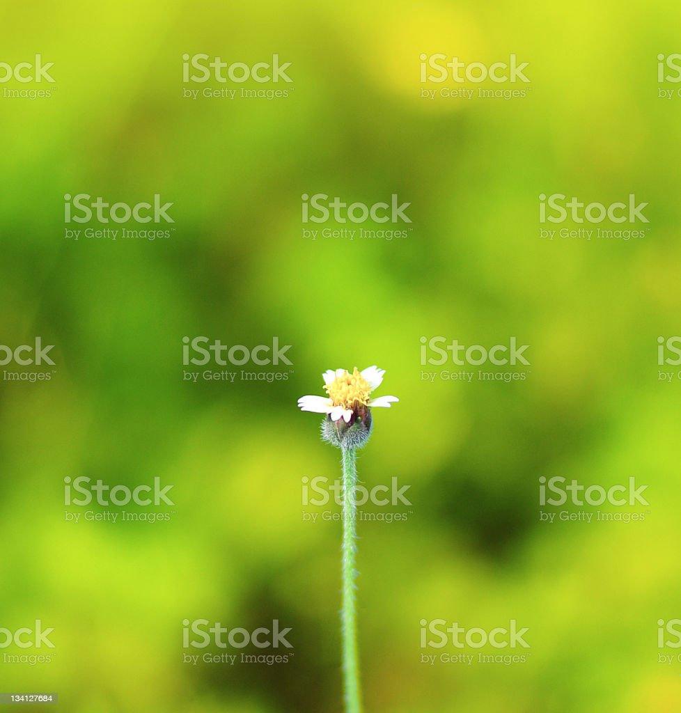 Beautiful Flowers Border. royalty-free stock photo