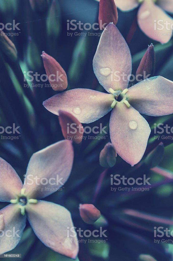 beautiful flowers close up royalty-free stock photo