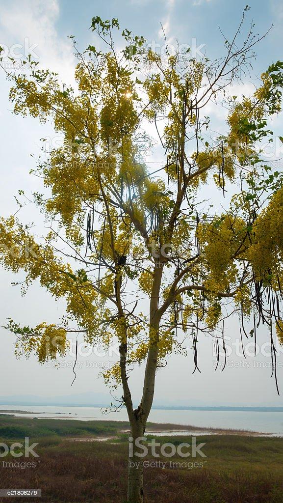 Schöne Blumen vor den Fluss und die Berge Lizenzfreies stock-foto