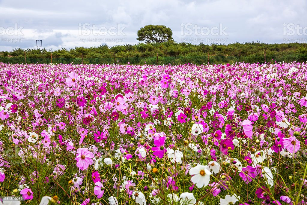 beautiful flowers meadow stock photo