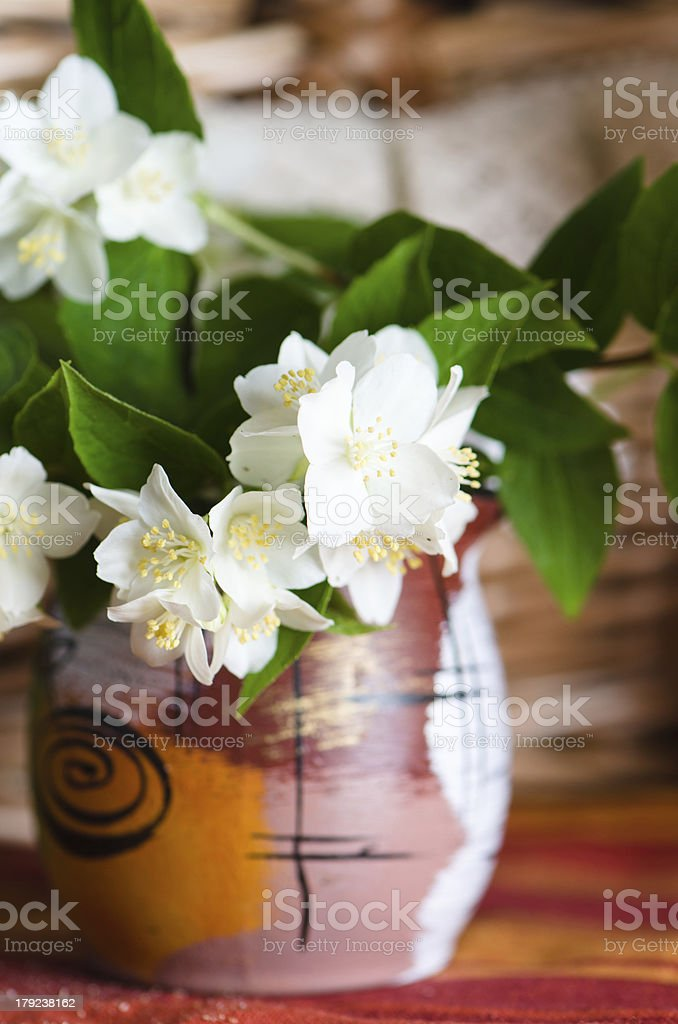 Beautiful flowers of jasmin in a pot, close up royalty-free stock photo