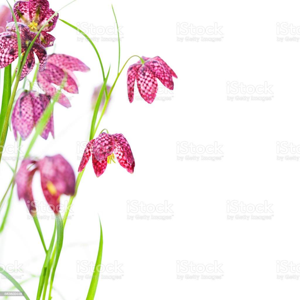 Beautiful flowers over white stock photo