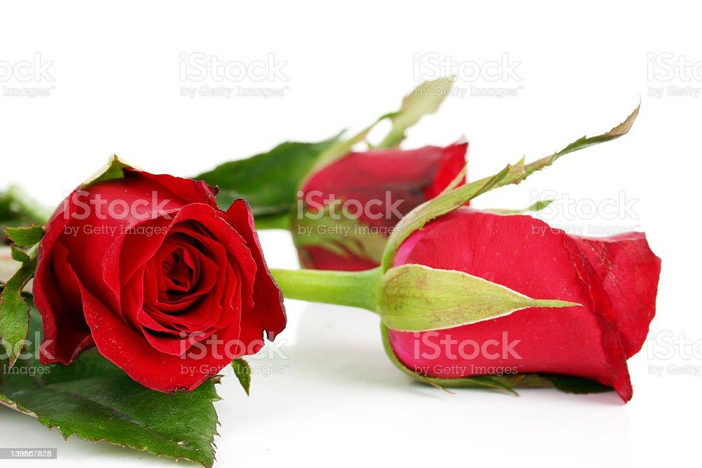 Schöne Blumen Lizenzfreies stock-foto