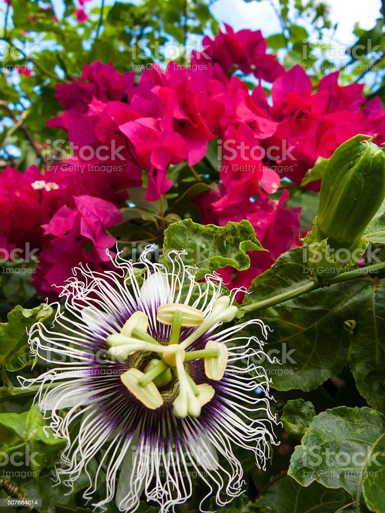 Beautiful flowers stock photo