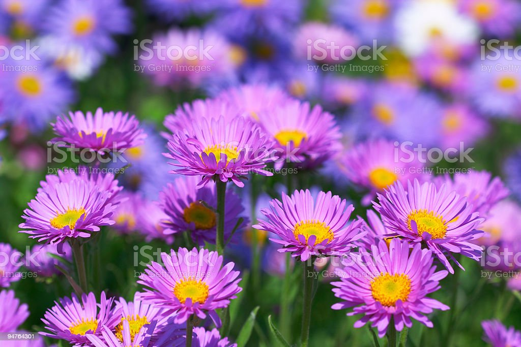 beautiful flowers stock photo