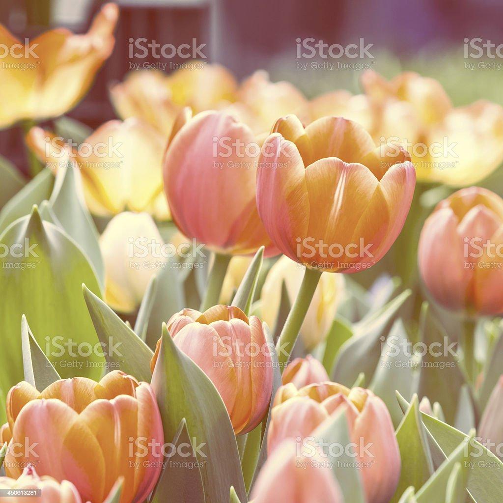 beautiful flowers Retro stype stock photo