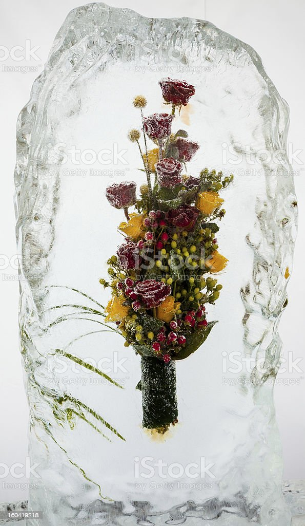 beautiful flowers with ice royalty-free stock photo