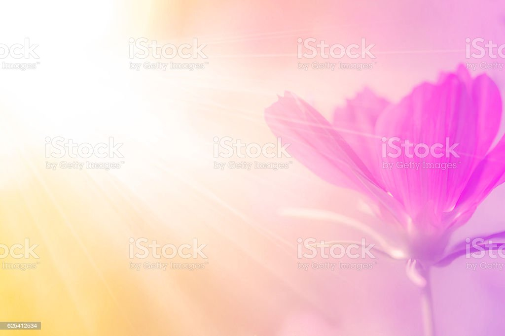 beautiful flowers with Soft Focus Color Filtered background stock photo