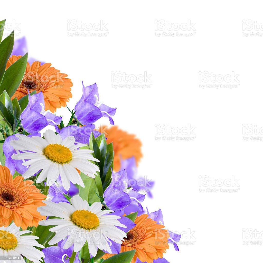 Beautiful flowes royalty-free stock photo