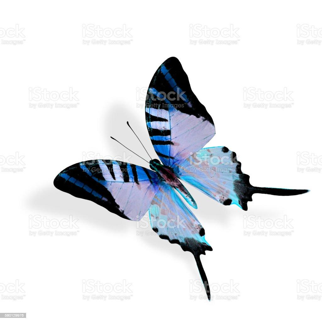 Beautiful Flying Blue butterfly, Fivebar Swordtail stock photo
