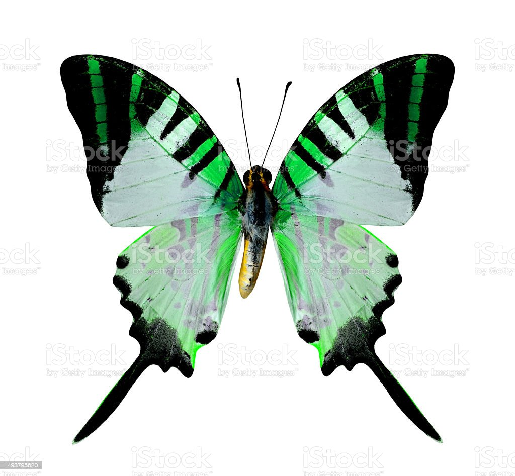 Beautiful Flying Green Butterfly isolated on white background stock photo