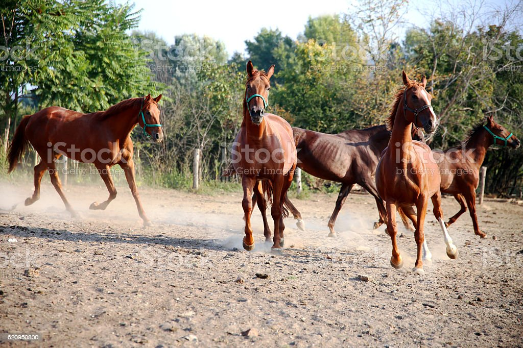 Beautiful foals playing in a pen on summer horse ranch stock photo