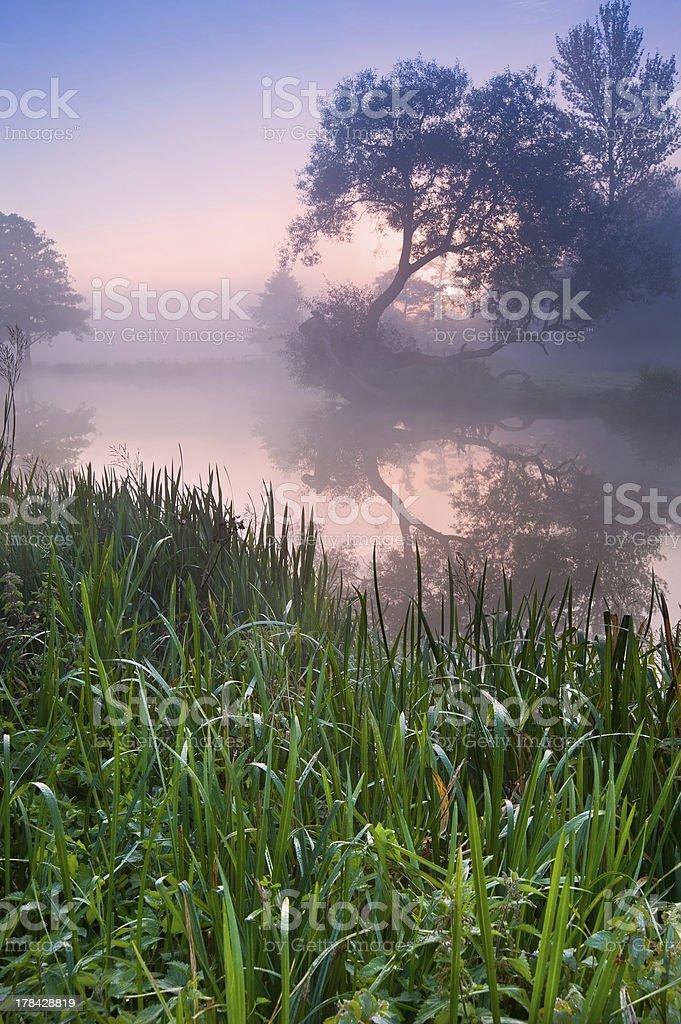 Beautiful foggy sunrise landscape over stock photo