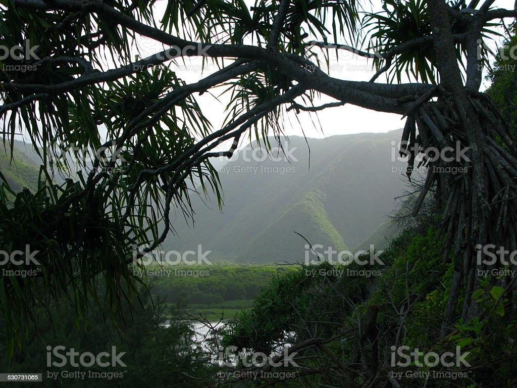 Beautiful Foggy Waipi'o Valley, Big Island, Hawaii stock photo