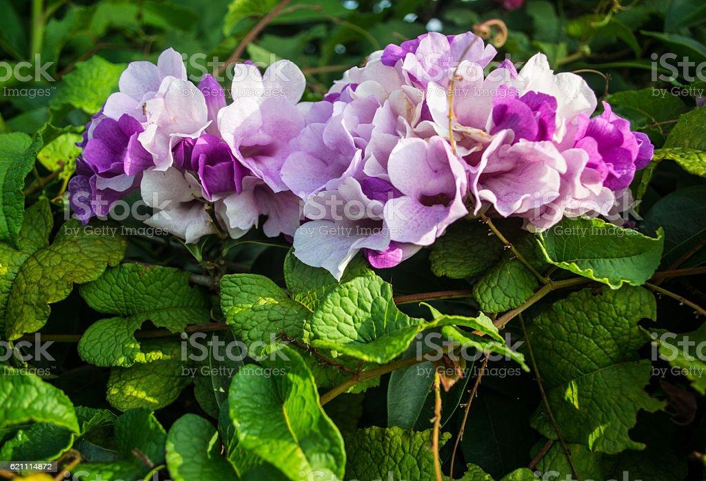 beautiful foliage royalty-free stock photo