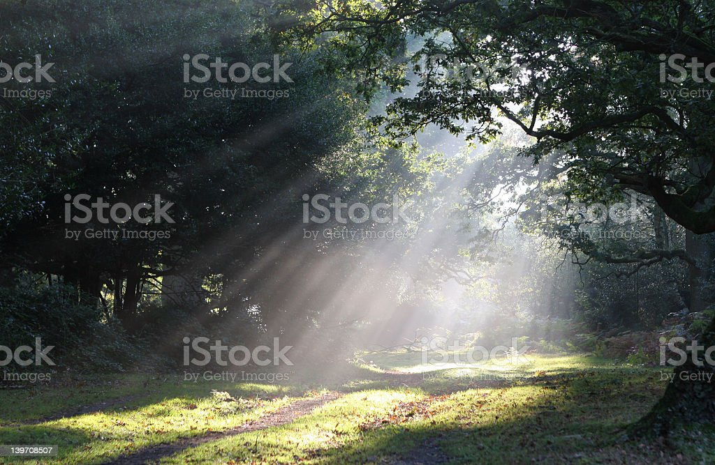 Beautiful forest glade with sunlight beaming through trees stock photo