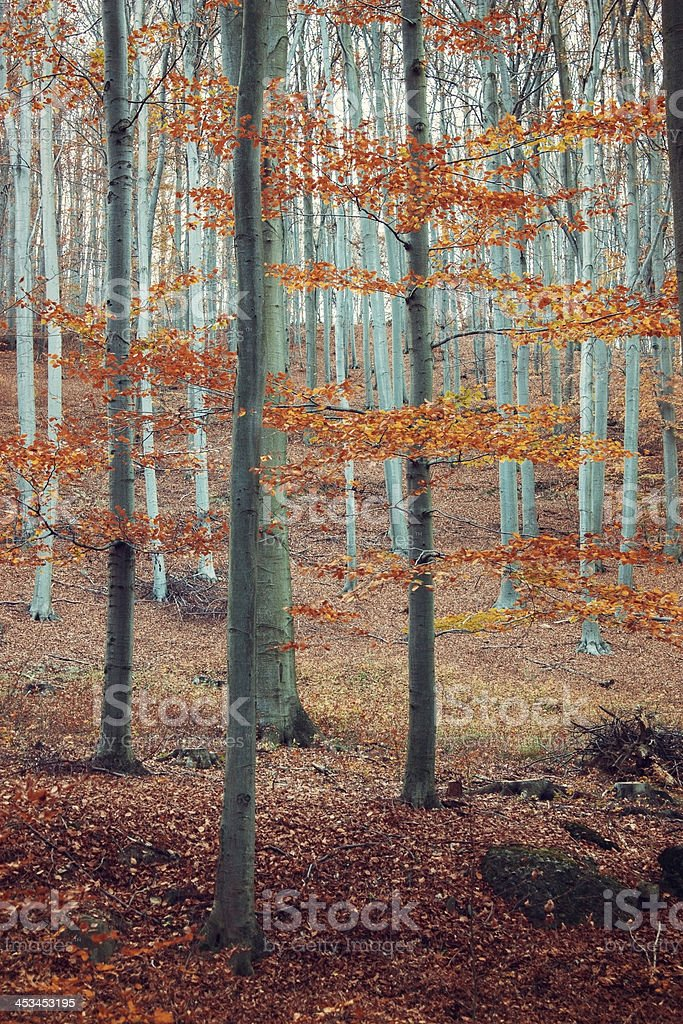 Beautiful forest in Matra Hungary stock photo