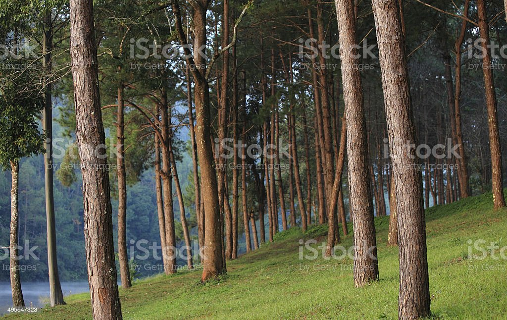 Beautiful forest lake in the morning. stock photo