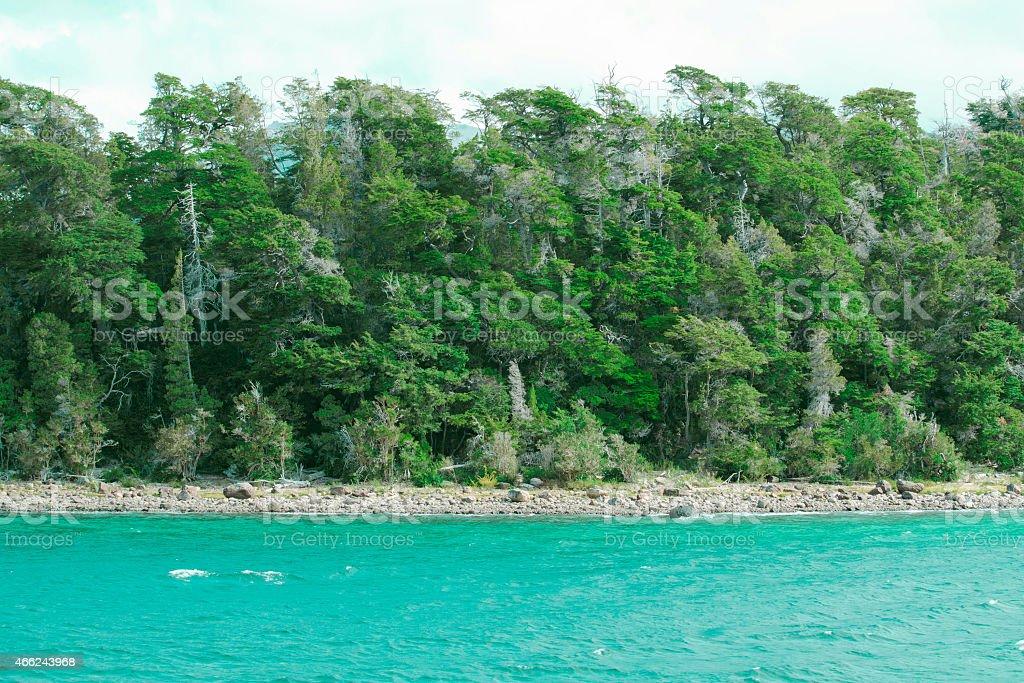 Beautiful forest lake stock photo
