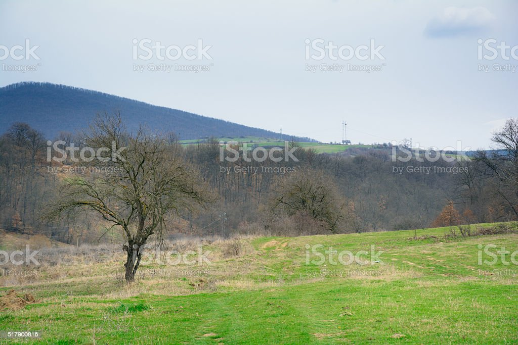 Beautiful forest, meadows and trees in the spring, Bulgaria stock photo