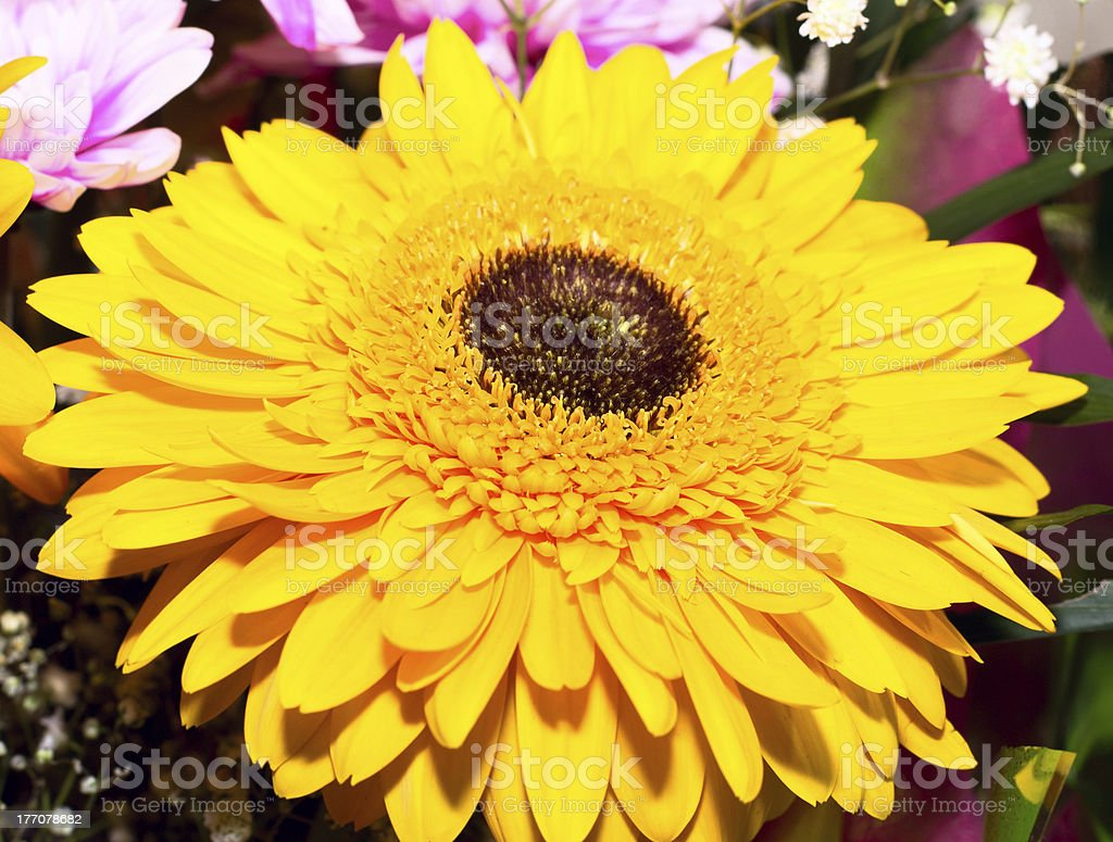 Beautiful fresh bouquet with gerberas. royalty-free stock photo