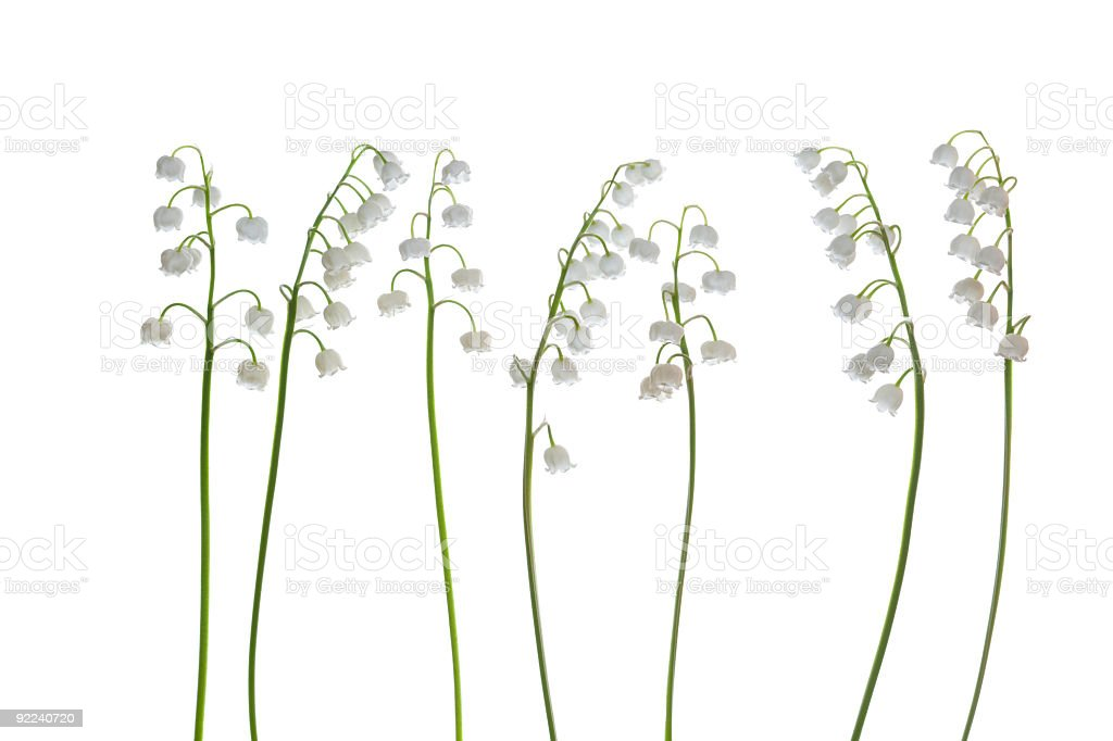 beautiful, fresh lilies of the valley royalty-free stock photo