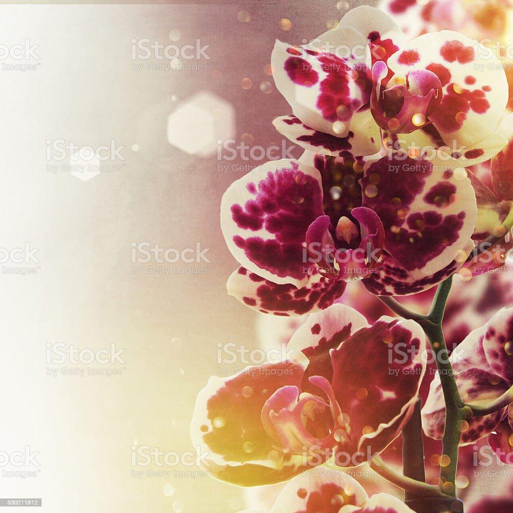 Beautiful fresh orchid flowers stock photo