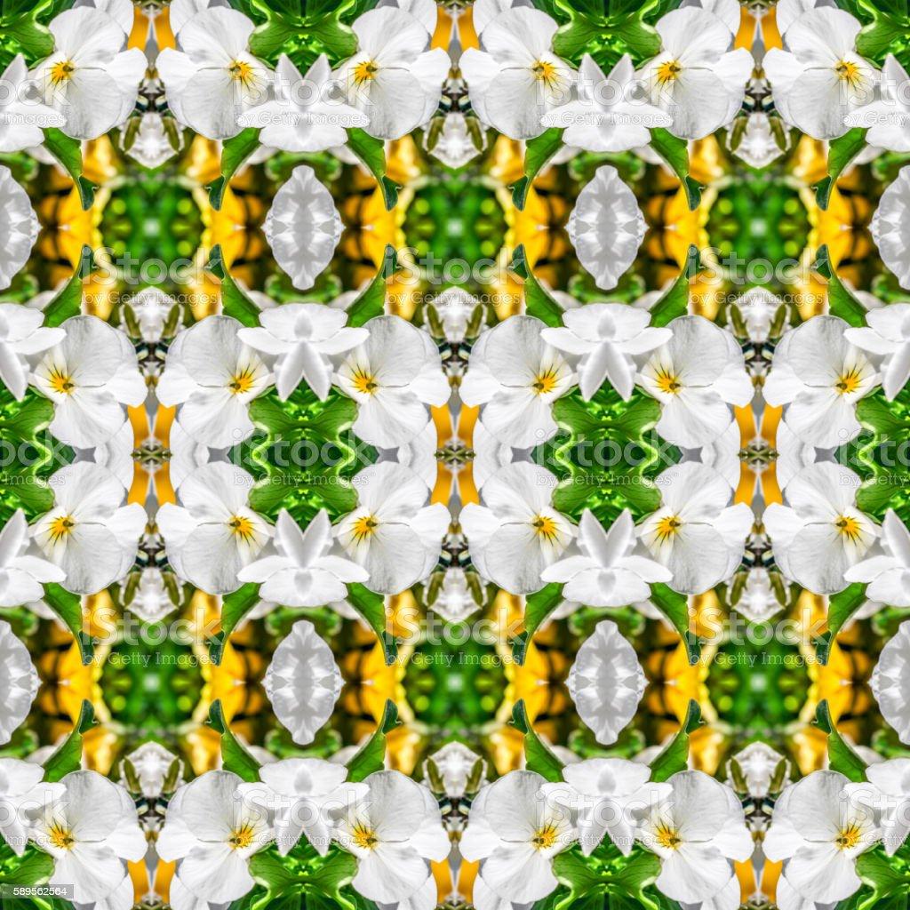 Beautiful fresh white pansy flowers macro surreal shaped symmetrical kaleidoscope stock photo