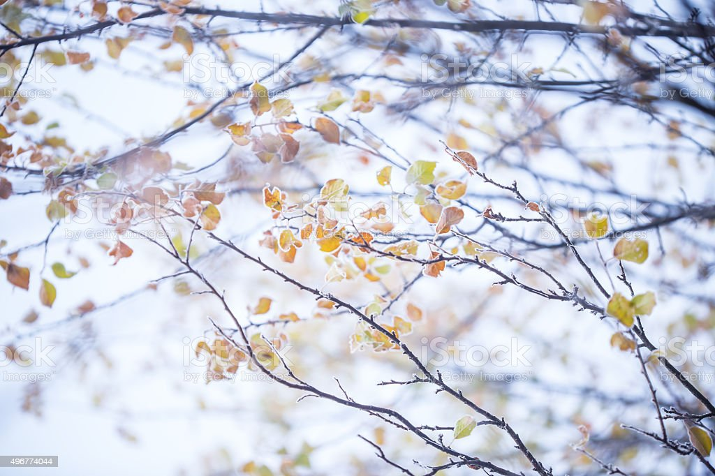 Beautiful frozen branches stock photo