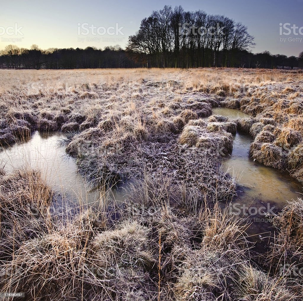 Beautiful frozen field Winter landscape with frosty grass royalty-free stock photo