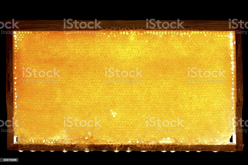 beautiful full honeycomb stock photo