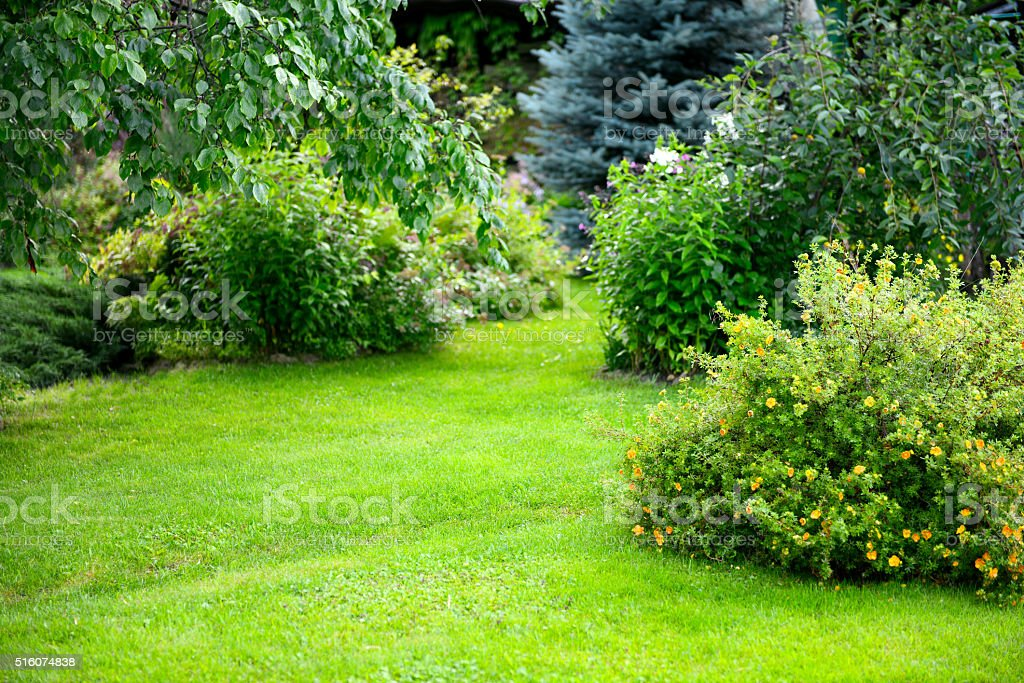 beautiful garden with trees, lawn with green grass stock photo