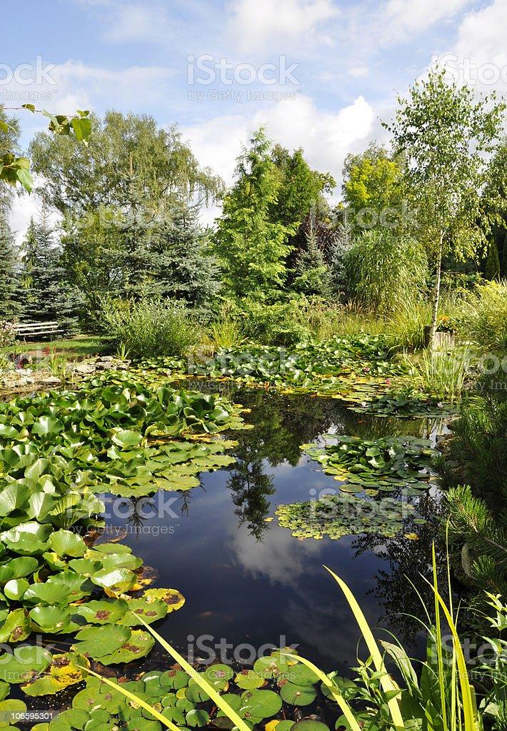Schöner Garten mit Teich und Wasser Lilien Lizenzfreies stock-foto