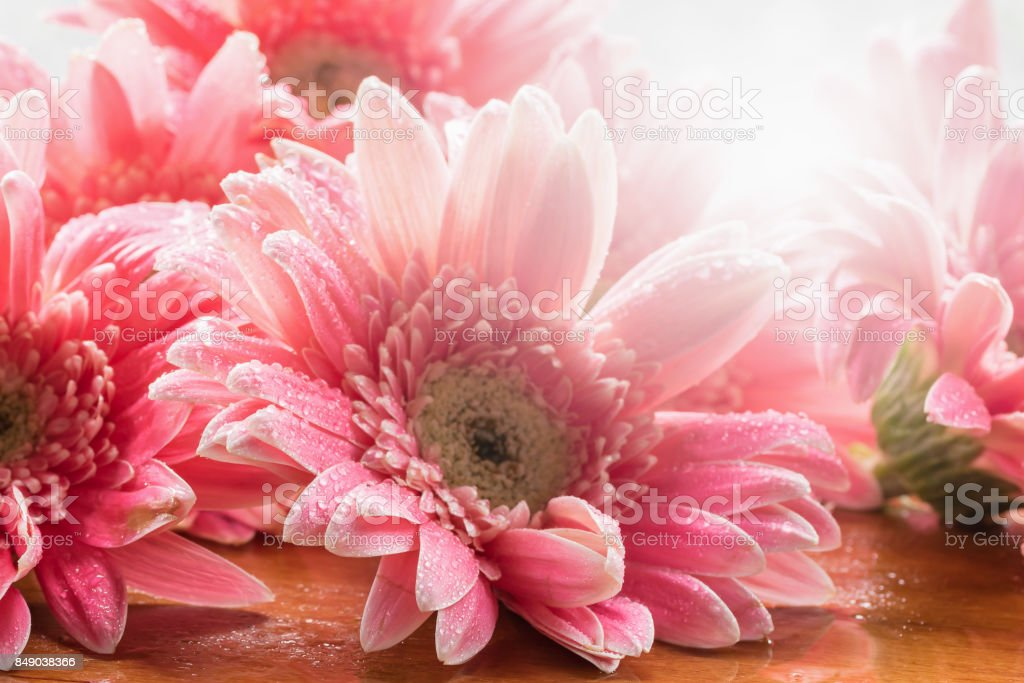 Beautiful gerbera flower hunt wet rain lay on the wooden floor. stock photo