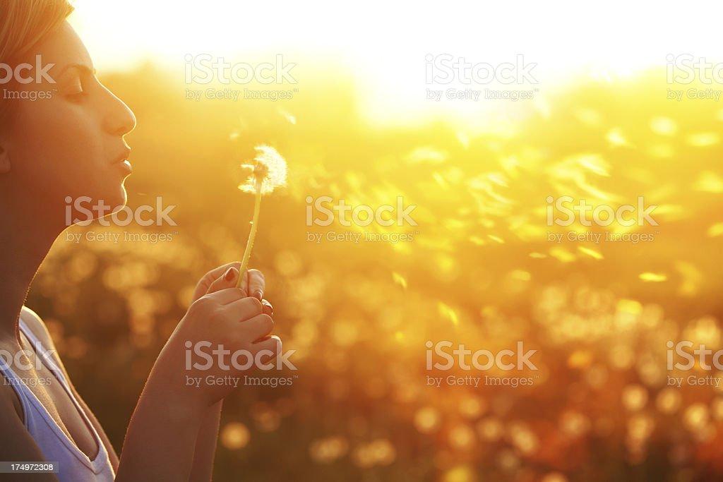 Beautiful girl blows dandelion in sunlit field stock photo
