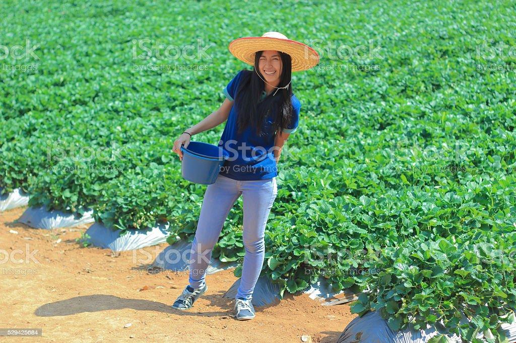 beautiful girl in strawberry farm stock photo