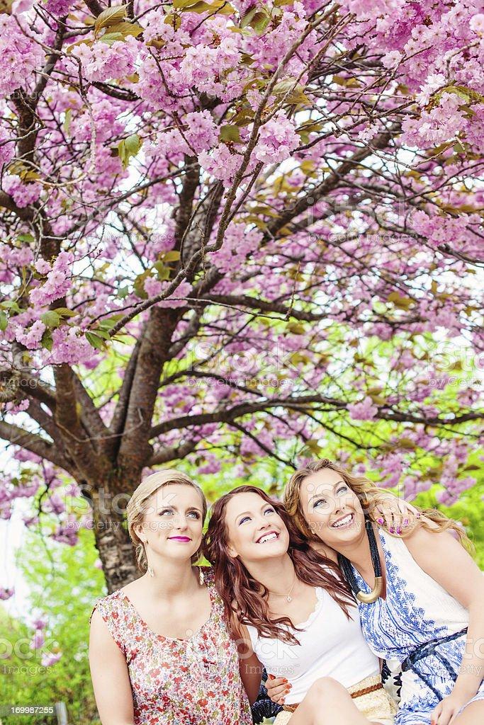 Beautiful girls in cherry blossom royalty-free stock photo