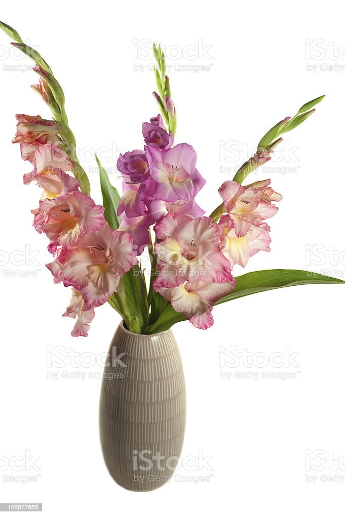 beautiful gladiolas isolated on white royalty-free stock photo