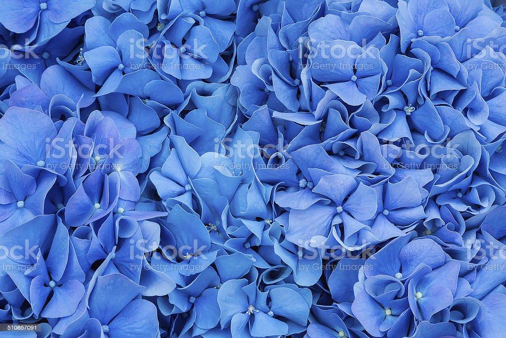Beautiful gladiolus flower close up stock photo