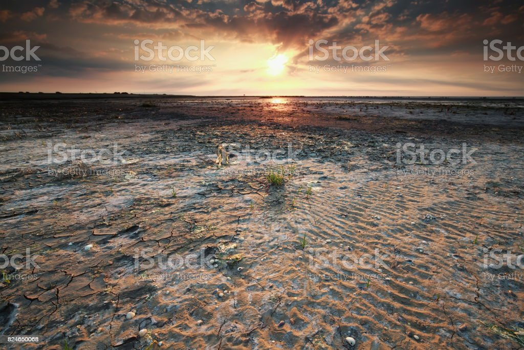beautiful gold sunset on Wadden sea coast at low tide stock photo