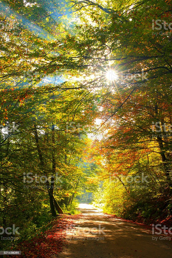 Beautiful golden autumn landscape stock photo