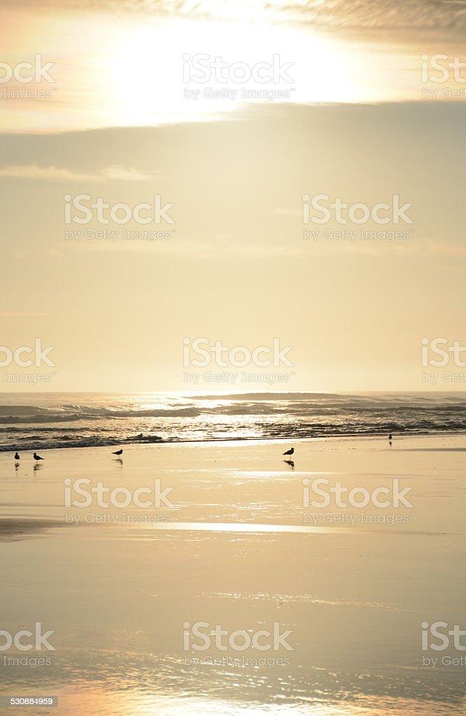 Beautiful golden beach stock photo